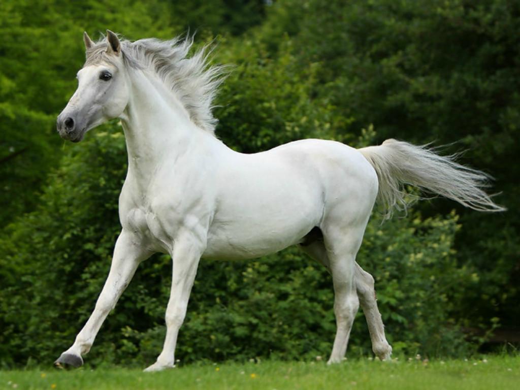 039 koně zvířata horses animals