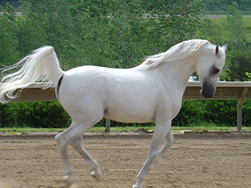 040 koně zvířata horses animals