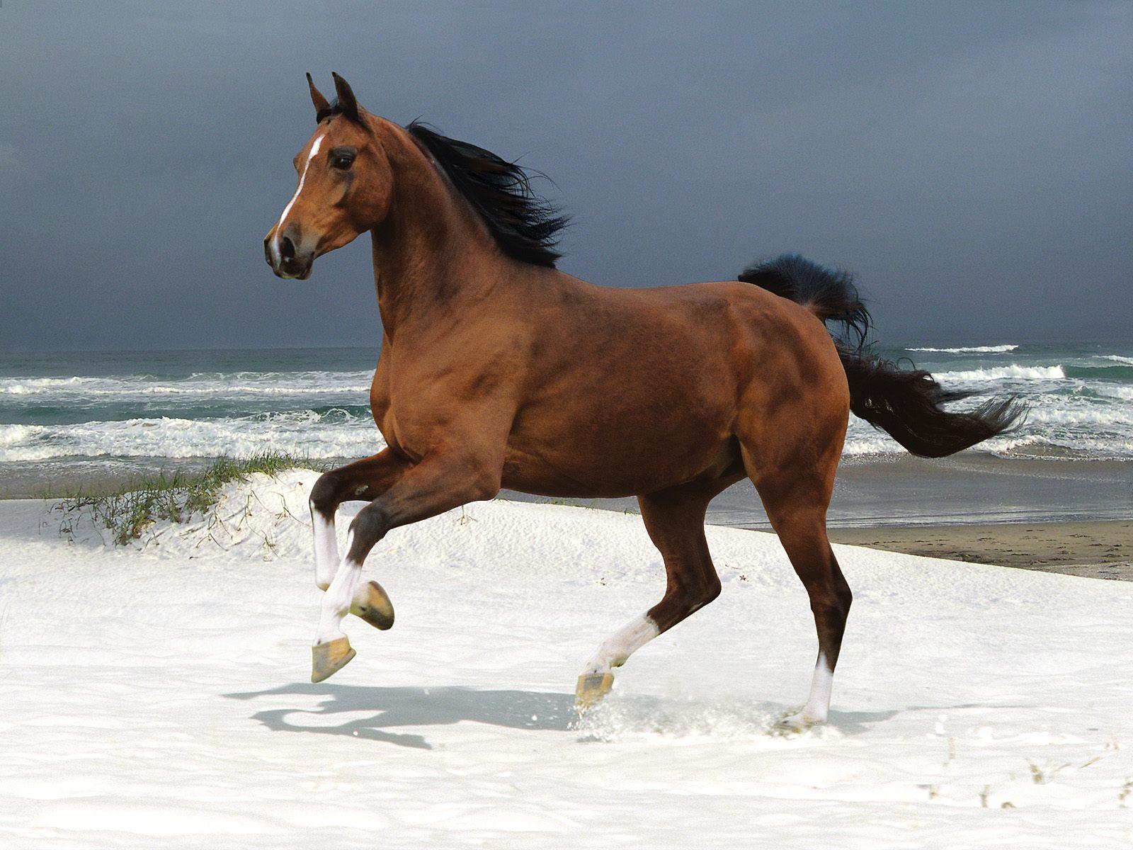 041 koně zvířata horses animals