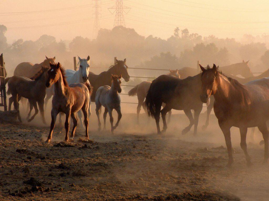 043 koně zvířata horses animals