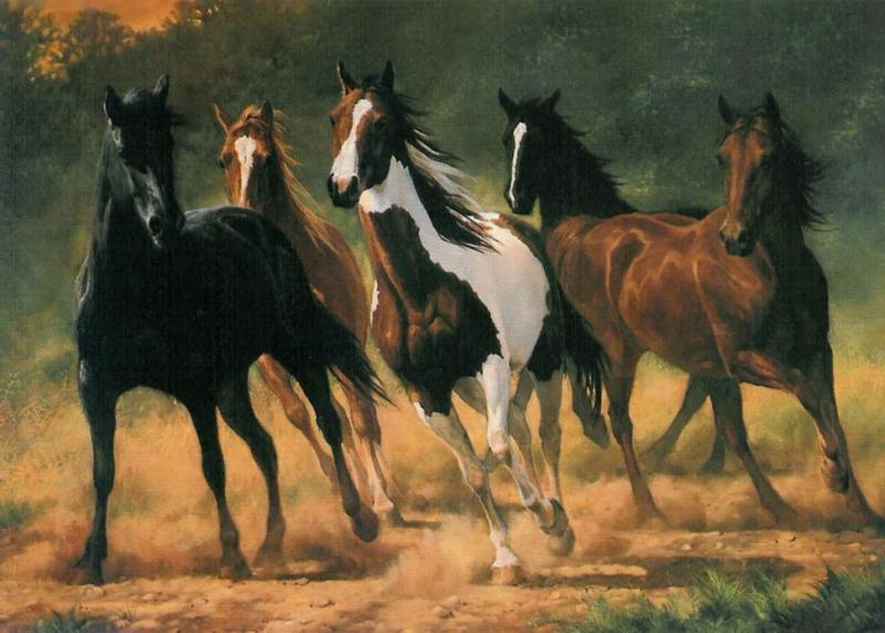 044 koně zvířata horses animals