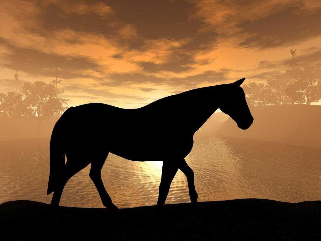 045 koně zvířata horses animals