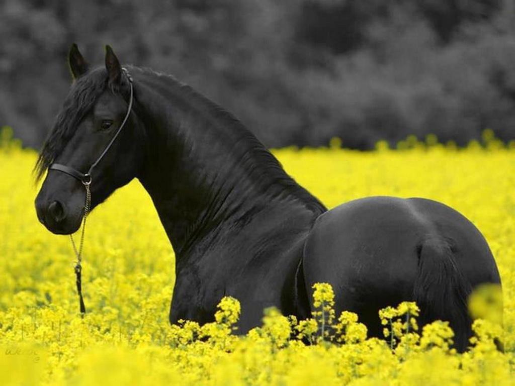 046 koně zvířata horses animals