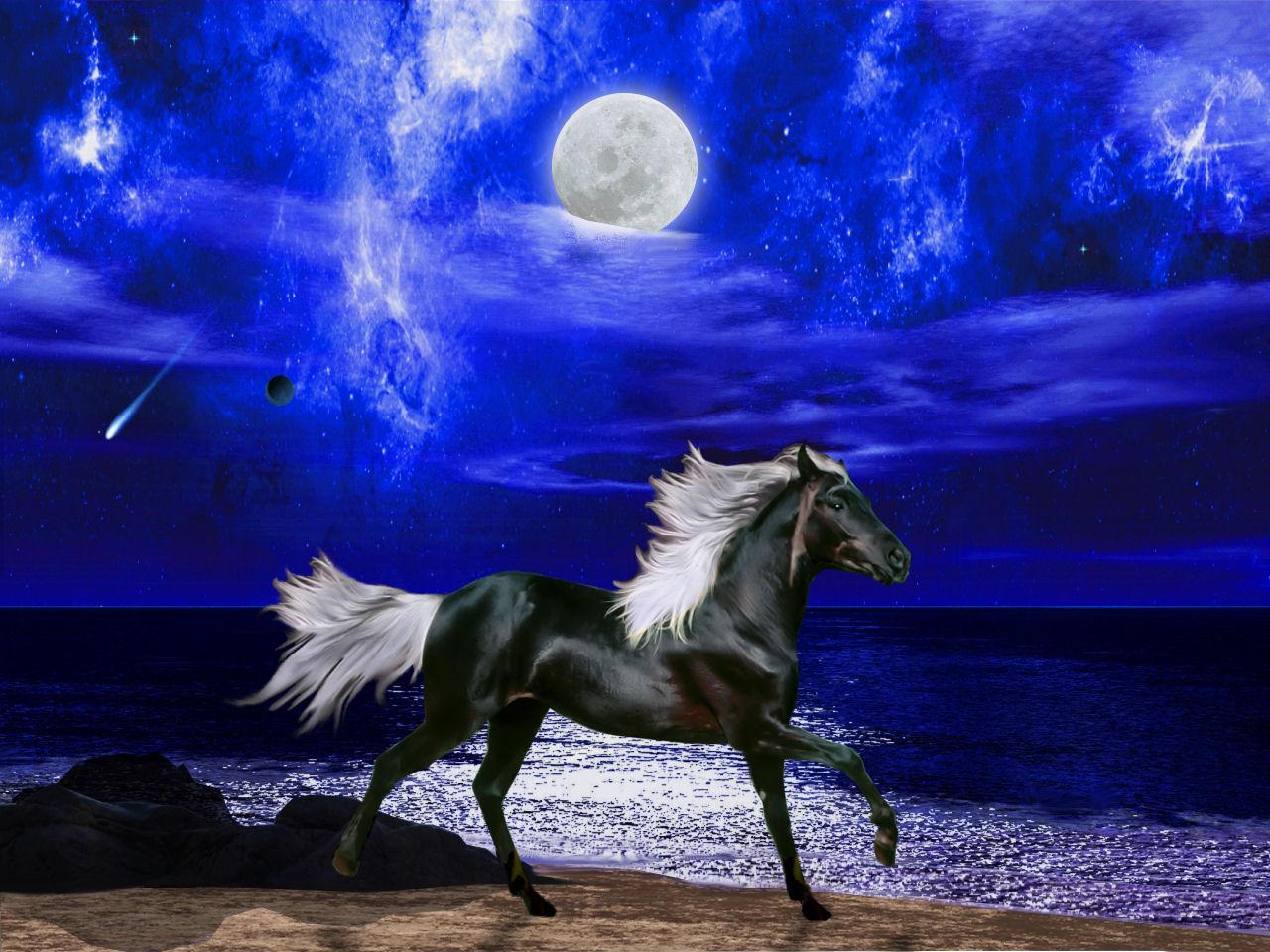 048 koně zvířata horses animals