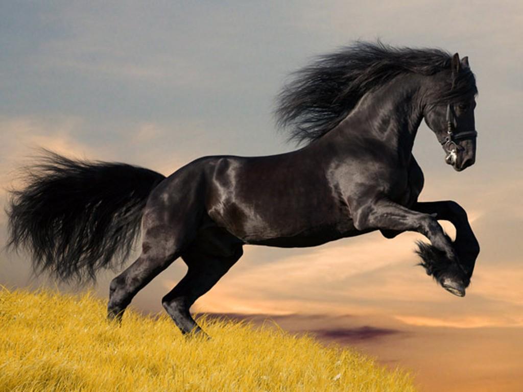 049 koně zvířata horses animals