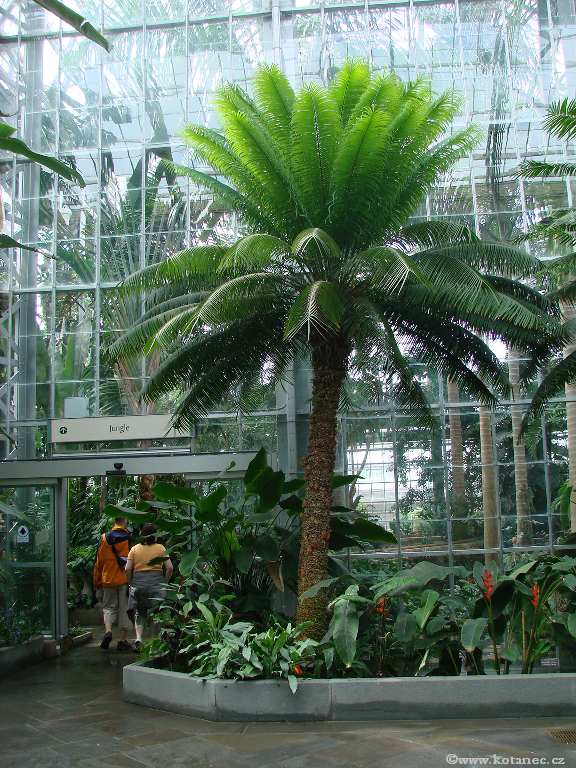 07 - Washington - Botanic Garden - Photo - Foto