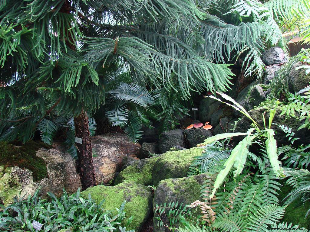 27 - Washington - Botanic Garden - Photo