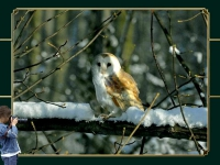 Wildlife in Winter - C.Vonck